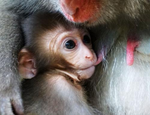 《以猴為貴》